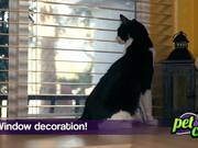 Animal Foundation Campaign: Pets: Cat
