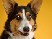 Pedigree Commercial: Doggie Dentures