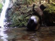Ohau Fur Seal Pups