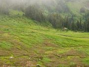 Mt. Rainier National Park in WA, USA