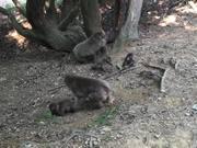 Arashiyama Monkey Park
