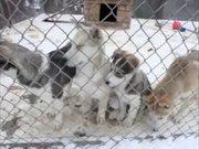 Denali National Park: Puppy Paws