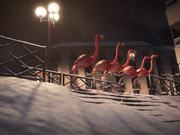 France 3 Video: Flamants - Ski