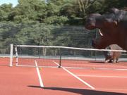 France 3 Video: Hippopotame - Tennis