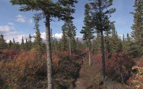 Denali National Park: Triple Lakes Trail
