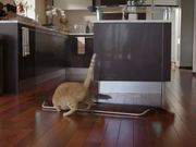 LG Commercial: Funny Cats and Dogs