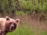 Denali National Park: Finding Denali