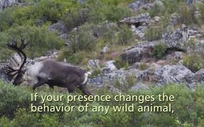 Denali National Park: Wildlife Encounters
