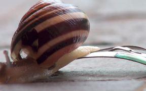 Theresa, The Reggae Slug