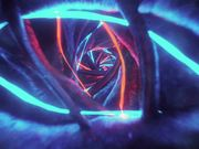 Warm Neon Birth