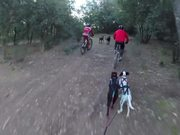 Training Bikejoring