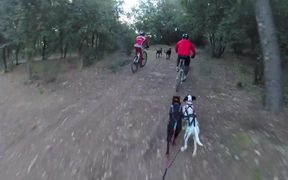 Training Bikejoring