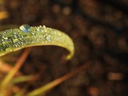 Dewdrop Rodeo in Macro View