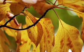 Fall Leaves in Macro View