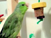 Kiwi's Bird Gym