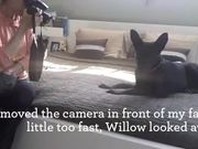 Conditioning and Desensitizing Dogs to Cameras