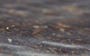 Shoreline Close Up