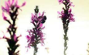 Sleeping Bee in Macro View