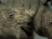 Yarra Trams Beware The Rhino Cinema Ad