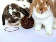 Ohio House Rabbit Rescue