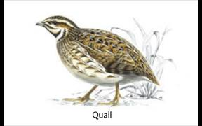 British Farmland Birds & Their Songs