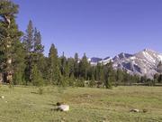 Yosemite National Park: Birdsongs