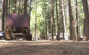 Yosemite Nature Notes: Black Bears