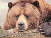 """WeChat """"Bear"""""""