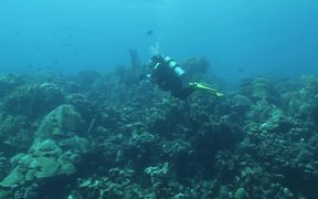 Explore Bonaire with Waterlogged Production