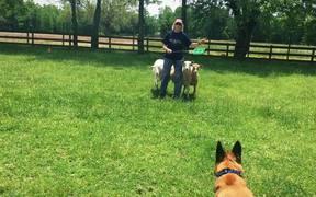 Gem's Herding Lesson