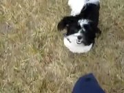 "Puppy ""Plays"" Come When Called"