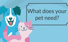 Being a Responsible Pet Owner: Visiting the Vet