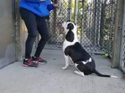 Brutus in Training