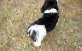 """Puppy """"Plays"""" Come When Called"""