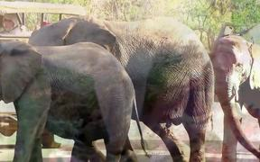 Discovering Safari in Hluhluwe