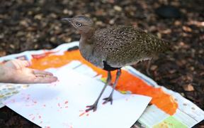 Animals Show Their Artistic Side at Zoo Knoxville