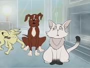 Problem Pets