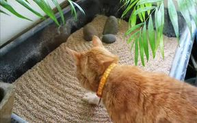 A Peaceful Zen Garden of Balance and Tranquility