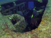 Two Wrecks, Two Reefs 2