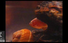 Eric The Fish