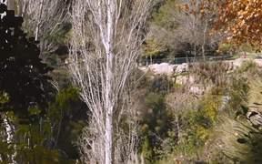 Zoo Short Film