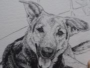 Shelby Soi Dog