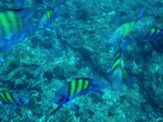 Underwater Powerray Fishing Drone