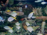 White Fishes and Corals