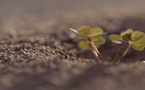 Ant Hill with Clover