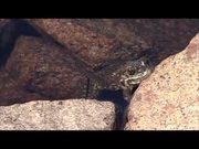 Yosemite National Park: Saving Yosemite's Frogs