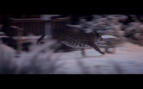 Whiskas Commercial: Whiskas Big Instincts