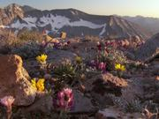 Yosemite National Park: Sky Islands