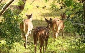 Cute Deer in Habitats