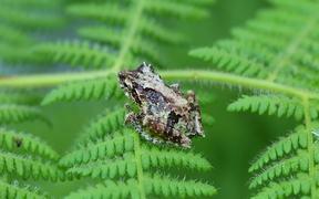 Frog in Macro View